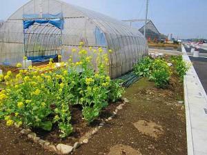 2010年春。ここで堆肥が造られています。