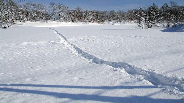 月形農場の雪下ろしに向かう獣たち〜小作人の足跡